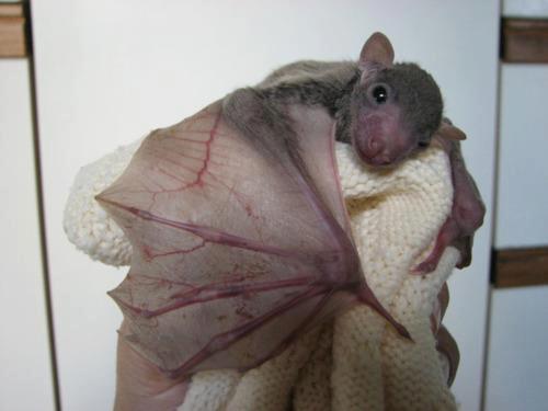 bat-cuddle
