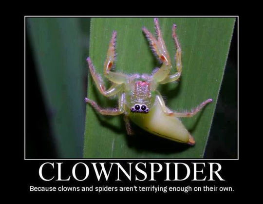 clown-spider