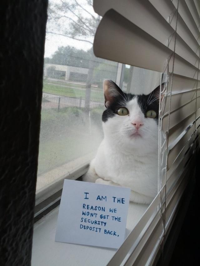 bad-cat-02