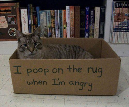 bad-cat-03