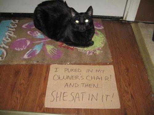 bad-cat-04