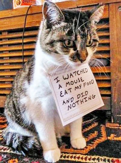 bad-cat-05
