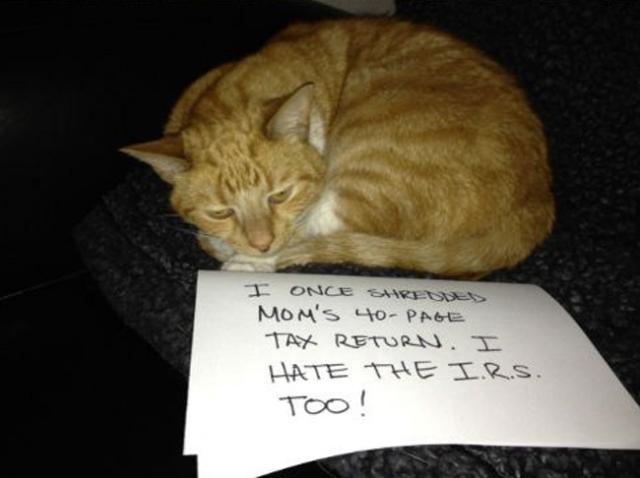 bad-cat-09