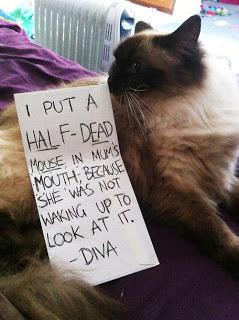 bad-cat-10