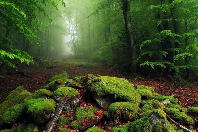 moss-forest