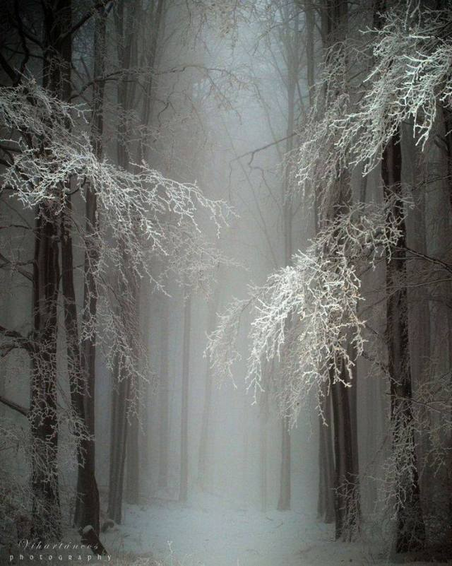 trees-frost-02