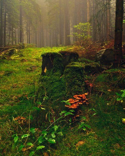 mushroom-forest-Norway